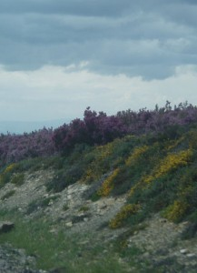 Heather, rockrose and flowered broom on the way (El Acebo)