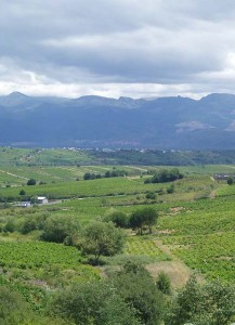 El Bierzo's Vineyards through the Way Of St. james (Villafranca del Bierzo)